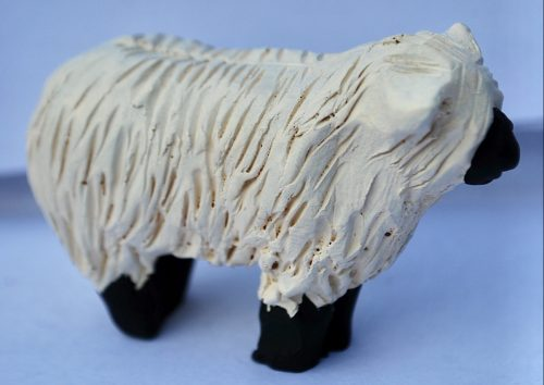bb028-sheep